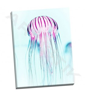 Jelly Fish - Tai Prints