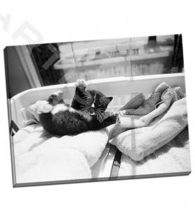 Kitten Laundry - Levin, Kim