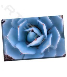 Blue Agave - Echols, Dana