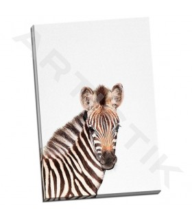 Baby Zebra - Tai Prints