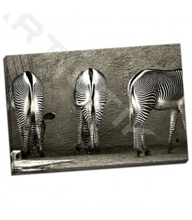 Zebra Butts - Lawhorn, Courtney