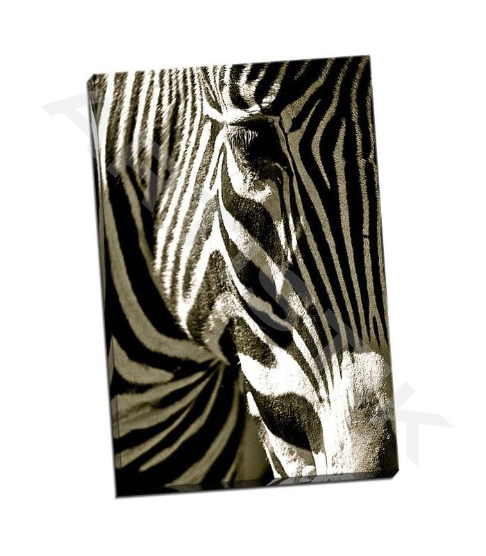 Zebra Head - Lawhorn, Courtney