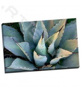 Agave New Mexico - Echols, Dana