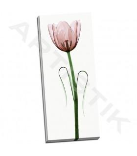 Tulip I - Coop, Robert