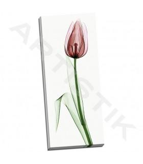Tulip II - Coop, Robert