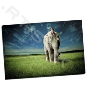 Elephant Carry Me - Madison, Jeff