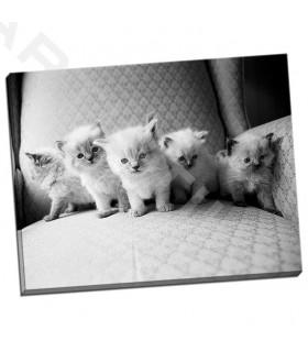 Five Kittens - Levin, Kim