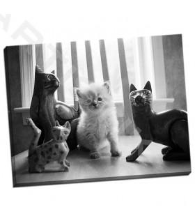 Ragdoll Kitten - Levin, Kim