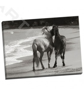 Young Mustangs on Beach - Scott, Traer