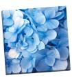 Blue Flowers - PhotoINC Studio