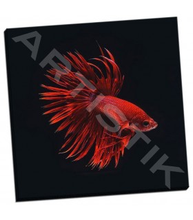 Red Betta Fish - PhotoINC Studio