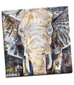 Elephants Gaze - Grey, James