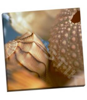 Shells 1 - PhotoINC Studio