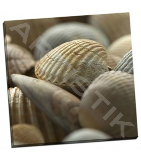 Shells 2 - PhotoINC Studio