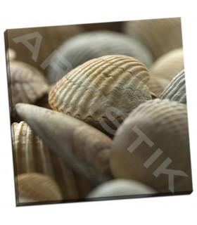Shells 2 - PhotoINC Studio