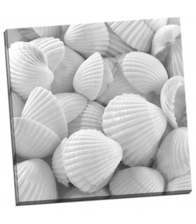 Shells 3 - PhotoINC Studio