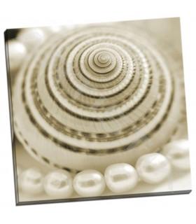 Shells and Pearls 1 - PhotoINC Studio