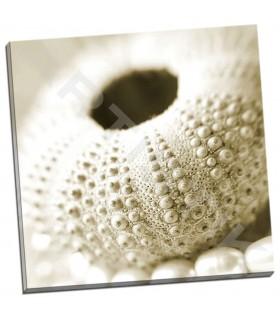 Shells and Pearls 2 - PhotoINC Studio