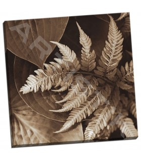 Painted Ferns II - Swanson, Rebecca