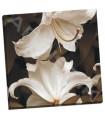 White Lilies - Swanson, Rebecca