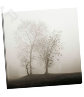Four Trees in Fog - Bell, Nicholas