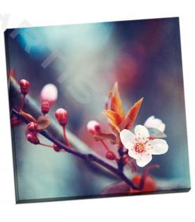 Natures Palette - Cochrane, Carolyn