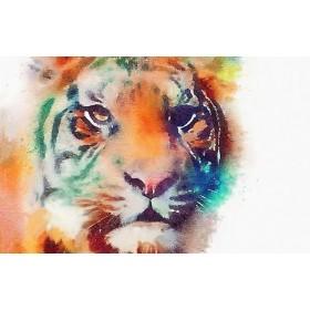 Divje živali